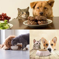 Чем кормить собак и кошек?