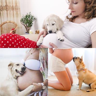 Какие преимущества приносят собаки во время беременности?